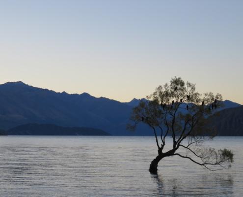 Baum im Wasser